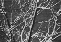 Trees and snow, Michelangelo Apartments