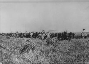 Thumbnail for Portrait of Men With Mule Driven Wagon Loads of Rice
