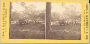Stereograph of agricultural workers standing in a field, Winchendon, Mass., ca. 1877