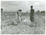 Rachel D. Moore, home management supervisor, giving demonstration in dusting plants from insects to Caldoria Smith; La Delta Project, Thomastown, La., June 1940