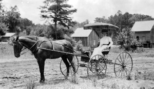 Corinne Davis in horse drawn buggy.