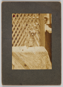 Photographic print of a dog