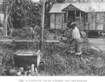 A Jamaican Negro farmer and bee-keeper