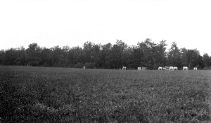 Views T. O. Sandy's Farm
