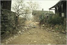 Bedford Pine