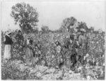 Women and children in cotton field