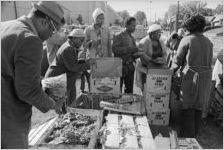 EOA Fresh Produce Distribution, circa 1974