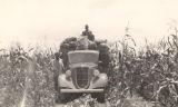 Two African American men on a truck in a corn field in Baldwin County, Alabama.