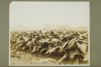 Tobacco field, Hartford County