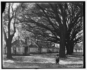 [The Hermitage, slave quarters, Savannah, Ga.]