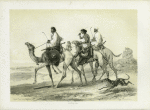 Ababdeh riding their Dromedaries