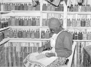 Jorena Pettway sorting peas inside her smokehouse. She still has many fruits and vegetables, which she canned last year, on the shelves around her. Gee's Bend, Alabama