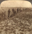 Students plowing at Tuskegee Institute in Tuskegee, Alabama.