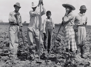 Negro men and women working in a field, Bayou Bourbeaux Plantation. Natchitoches, Louisiana