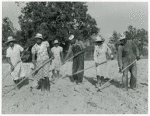 The family of Mr. Leroy Dunn, chopping cotton in a rented field near White Plains, Greene County, Georgia, June 1941