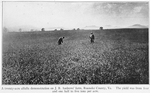 A twenty-acre alfalfa demonstration on J.B. Andrews' farm, Roanoke County, Va. The yield was from four and one half to five tons per acre