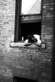 Jasper Wood Collection: Person leaning on sill of open window