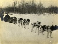 """""""Dog Trains From Great Slave Lakes"""""""