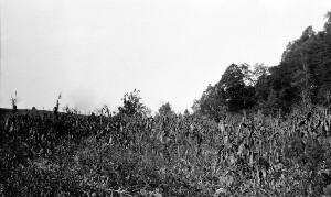 Views near Marion