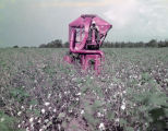 African American man operating a mechanical cotton picker in a field in Montgomery County, Alabama.