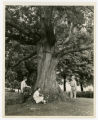 The Pemberton Oak, located near Bristol, Tennessee