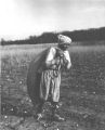 African-American field worker bringing in the cotton in West Tennessee.