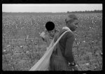 [Untitled photo, possibly related to: Young cotton picker, Pulaski County, Arkansas. Schools for colored children do not open until January 1st so as not to interfere with cotton picking]
