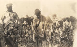African American farm workers picking cotton on the C.L. Pearson Farm near Dadeville, Alabama.