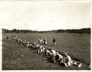 Agricultural workers picking cranberries, Cape Cod, Mass., 1905-1915
