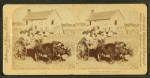 Rapid transit in southern Mississippi. [Large group of children on an oxcart.]