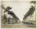 Avenue of Palms; Brick dam; Georgetown; No. 85
