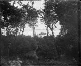View of vegetation and a boat on the ocean