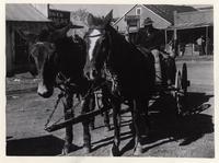 Mule-drawn carriage