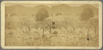 Scenes in the Wood and Coal market, Christiansted, St. Croix, W. I
