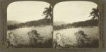 The Harbor of Port Antonio from the Island, Jamaica