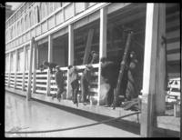 Cleaning the boat at Natchez